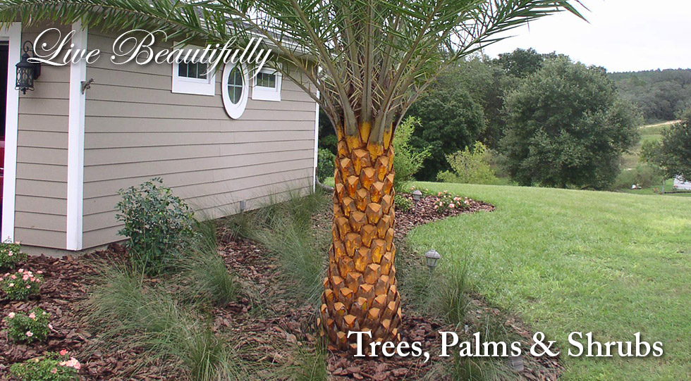 Landscaping Services in Mt. Dora